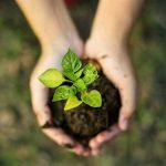 Nachhaltigkeit Hände Erde Pflanze